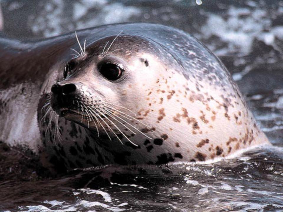 фото морских животных прим края серьезный журналист